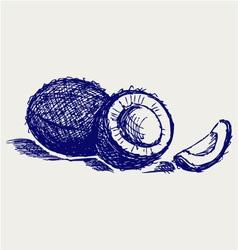 Coconut vector image vector image