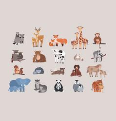 cute animals with babies set raccoon deer fox vector image