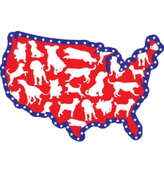 us map and dogs vector image vector image