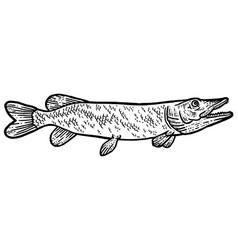Big predatory fish pike t-shirt apparel print vector