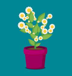 flat flower in pot vector image