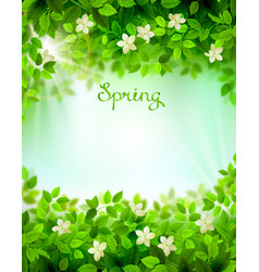 Spring branches with fresh green leaves season vector