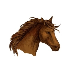 Stallion horse sketch of brown arabian racehorse vector image