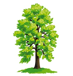 Linden with lush green crown vector