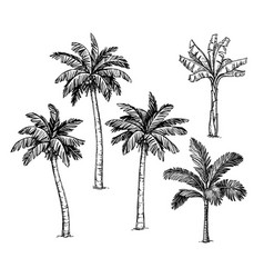 Collection palm trees vector