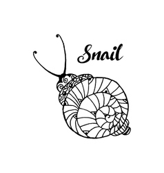 Doodle style fun lacy snail monochrome animal vector image