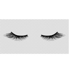 Eyelashes icon isolated transparent background vector