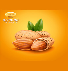 Realistic detailed almonds with nutshells vector