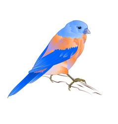 Small thrush bluebird songbirdon vector