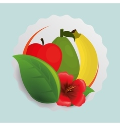 Apple banana flower and leaf design vector