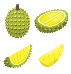Durian icons set isometric style vector