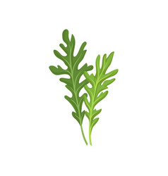 two small green rocket leaves fresh arugula vector image