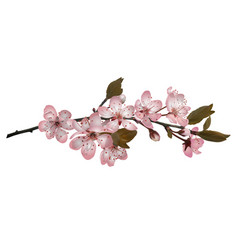 sakura flowers background vector image