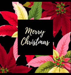 christmas card with poinsettia vector image vector image
