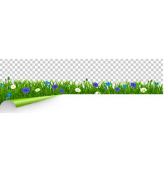 Grass and blue flowers border transparent vector