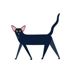 Oriental shorthair cat breed flat vector