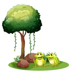 Two smiling frogs beside the tree vector