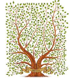 Old vintage tree vector image vector image