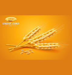 detailed wheat ears oats or barley isolated vector image