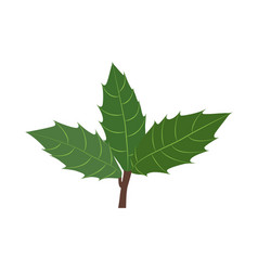 holly branch with leaves vector image
