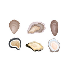 Oyster shells different shapes set vector