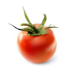 red tomato on a white background vector image