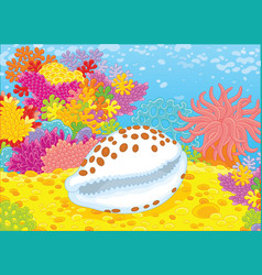 Shell on a reef vector