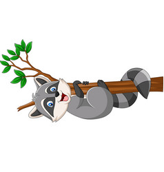 cartoon raccoon on tree branch vector image