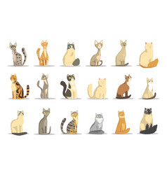 cat different breeds set cute pet animal vector image