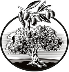circular frame shows an old olive tree vector image