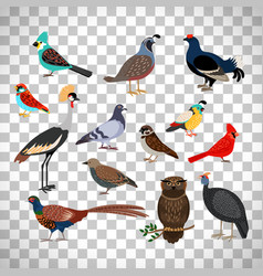 cute birds set on transparent background vector image