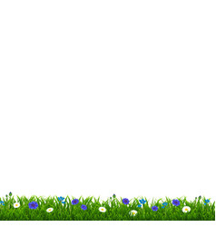 Green grass with blue flowers vector