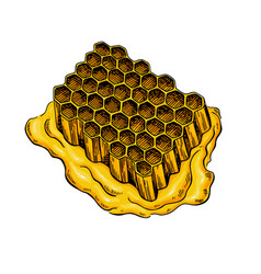 honeycomb drawing hand drawn honey vector image