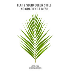 areca palm sketch or watercolor style by hand vector image