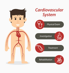 Cardiovascular system and medical line icon vector