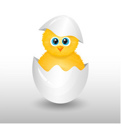 cute little chick in cracked egg vector image