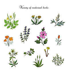 Set of medicinal plants vector