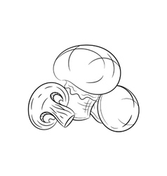 Hand drawn champignon sketches on white background vector image