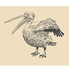Original ink drawing of pelican vector
