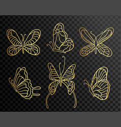 set butterflies butterfly icons isolated on vector image