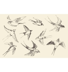 Swallows Flying Bird Hand Drawn Sketch vector image