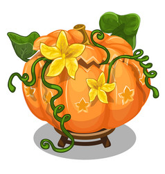 large ripe pumpkin with green leaves and flowers vector image