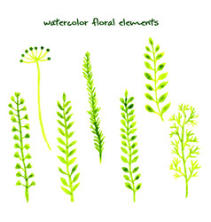 set of different watercolor hand drawn herbs vector image vector image