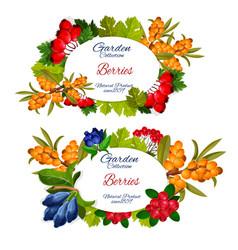 buckthorn cowberry and juniper berry vector image