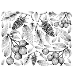 Hand drawn of loganberries and magenta cherries ba vector