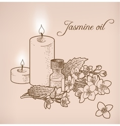 Jasmine essential oil and candles vector image