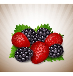 strawberry and blackberry vector image vector image