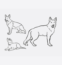 german shepherd dog pet animal sketches vector image