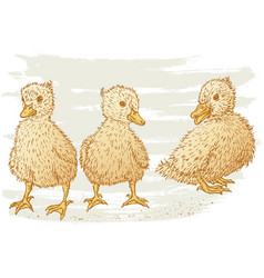 Hand drawing small ducklings vector