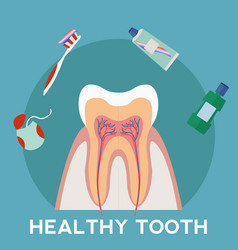 Healthy tooth and hygene concept vector